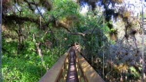 This image has an empty alt attribute; its file name is Myakka-Canopy-Walkway-300x169.jpg