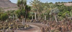 This image has an empty alt attribute; its file name is Oasis-Park-1-300x137.jpg