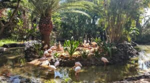 This image has an empty alt attribute; its file name is Oasis-Park-300x166.jpg