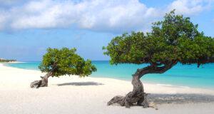 Eagle Beach, Palm Eagle Beach Aruba, Top 20 Beach Destinations, Top Beaches in the World, Eagle Beach Aruba