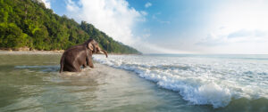 Elephant Beach, Havelock Island Andamans, Top 20 beach destinations, Top 20 Beaches in the World, best Havelock Island beaches, best Havelock Island hotels, best Havelock Island restaurants