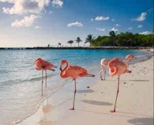 Where Can I Vacation During COVID?  Beach worthy destinations.  Travel to Aruba during COVID